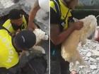 Policiais resgatam cão de escombros após terremoto no Equador