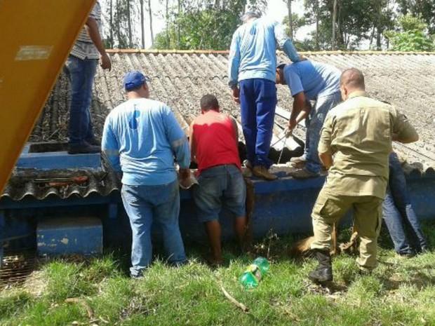 Animal foi retirado por cinco bombeiros (Foto: Pedro Miguel/ Ripa dos Malandros)