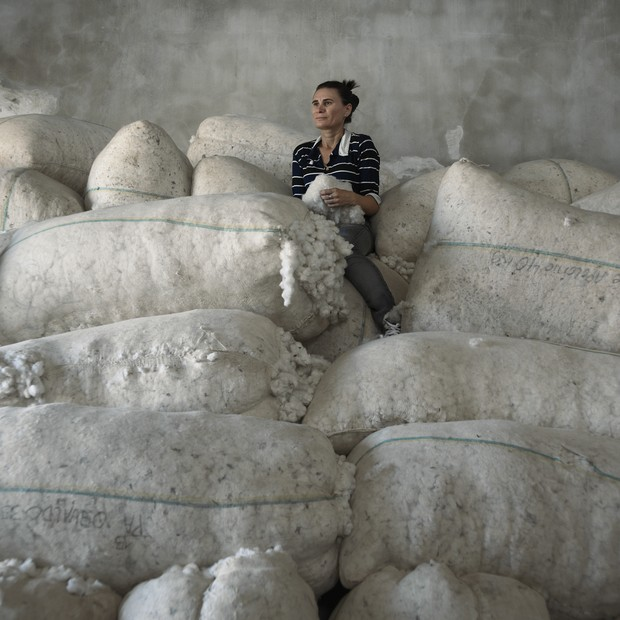 ECOERA: Algodão Orgânico (Foto: Reprodução )