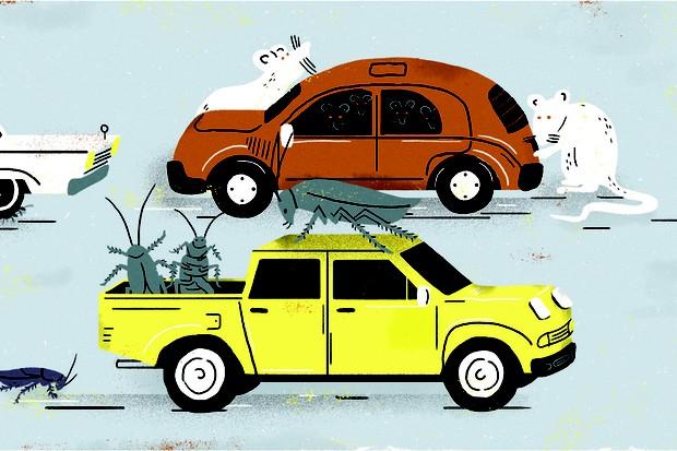 Como evitar infestação de pragas no veículo (Foto: Rodrigo Fortes / Autoesporte)