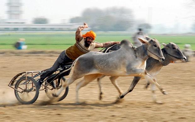 Competição acontece em Kila Raipur, perto de Ludhian (Foto: AP)