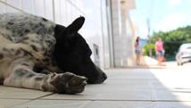 Cão espera há um mês retorno dos donos (Fernando Brito/G1)