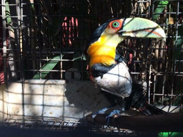 ONG faz campanha para construir UTI de animais silvestres em Jundiaí (Foto: Divulgação / ONG Mata Ciliar)