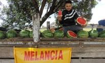 Melancia com garantia atrai compradores em Sorocaba (Emilio Botta )
