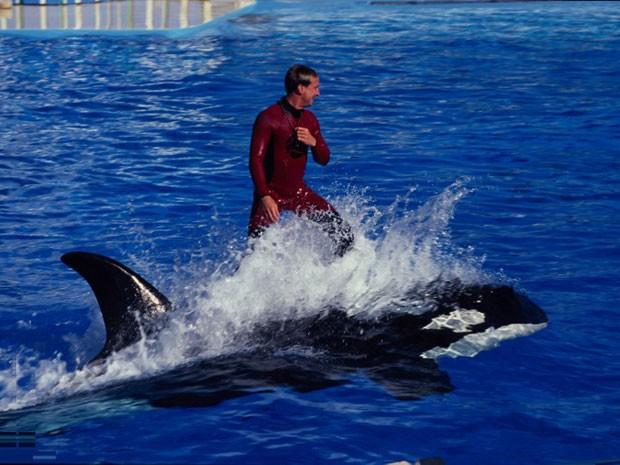 Espetáculo com uma orca no SeaWorld San Diego (Foto: Gardel Bertrand/hemis.fr/AFP)