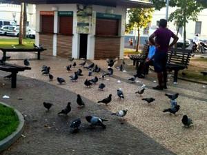 Pombos Rio Branco (Foto: Nathacha Albuquerque/G1)