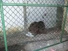 Muro é explodido em nova tentativa de fuga no Complexo do Curado