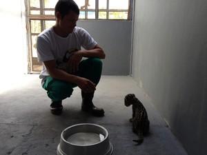 Filhote de onça pintada encontrado no município de Caroebe foi levado ao Cetas (Foto: Vanessa Lima)