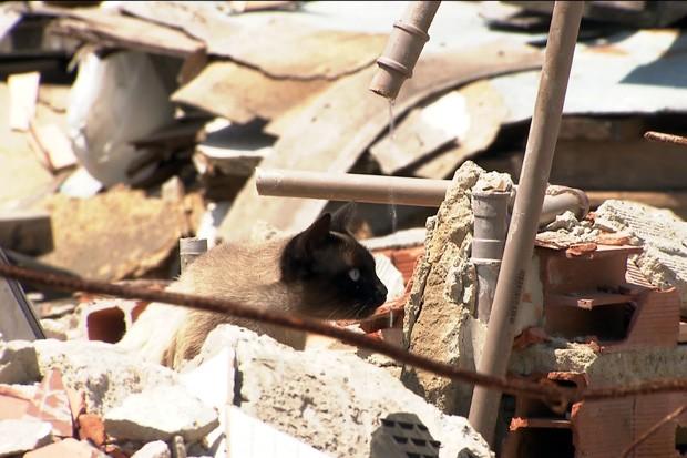 Gato animais abandonados (Foto: TV Globo/Reprodução)