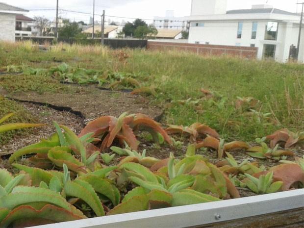 Telhado vivo faz parte do sistema sustentável da casa da engeneira (Foto: Claudiana Maria/Arquivo pessoal)