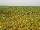 Nova praga preocupa produtores de Mato Grosso (Leandro J. Nascimento/G1)