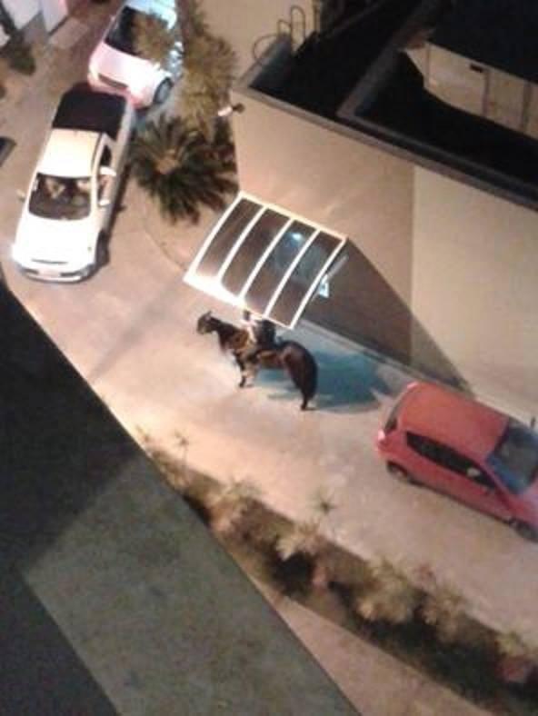 Cavalo Delta (Foto: Felipe da Costa/ Divulgação)