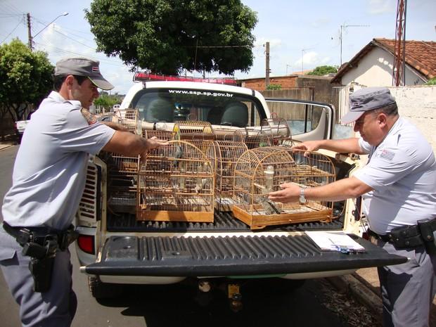 Criador mantinha 17 aves silvestres em cativeiro sem autorização do Ibama em Jaboticabal, SP (Foto: Divulgação/Polícia Ambiental)