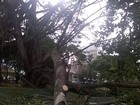 Pedestre fica ferida após ser atingida por tronco de árvore em Uberlândia