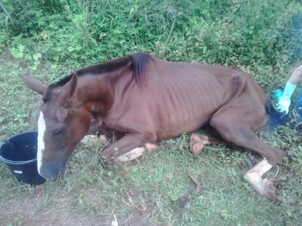 Cavalo abandonado Tupaciguara MG (Foto: Polícia Militar/Divulgação)