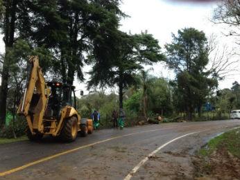 Na manhã desta segunda-feira (23), funcionários faziam a retirada das árvores (Foto: Daiana Lopes/RPC TV)