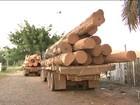 Agentes Federais apreendem caminhões com madeira ilegal no MA
