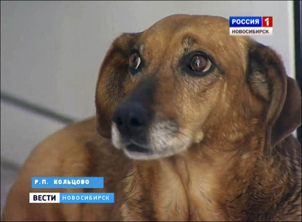 Cadelinha Masha visita o hospital (Foto: Russia TV/Reprodução)