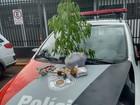 PM apreende drogas e pé de maconha com homem em São Manuel