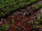 Produtores de soja de Mato Grosso reclamam da qualidade das sementes