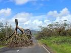 Ciclone em Fiji deixa 21 mortos e gera temores de crise de saúde