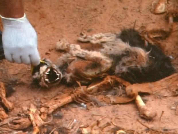 Suposto cemitério clandestino de animais é denunciado em Cajuru (SP) (Foto: Cesar Tadeu/ EPTV)