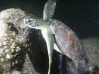 Ecossistema da Baía de Guanabara sobrevive à poluição do mar