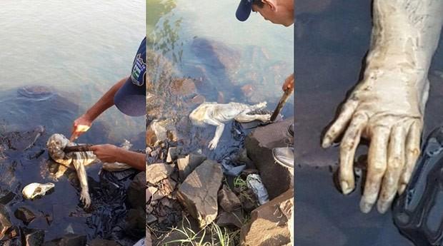 Imagens do animal não identificado circularam pelas redes sociais (Foto: Reprodução/Facebook)