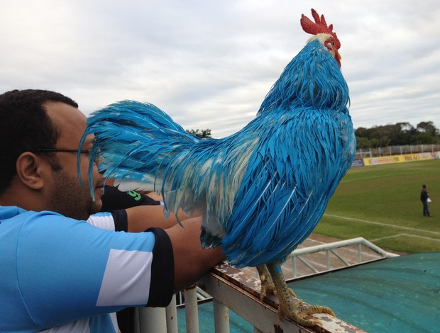 Tissoka, mascote vivo do Ji-Paraná ao lado de torcedor (Foto: Shara Alencar)