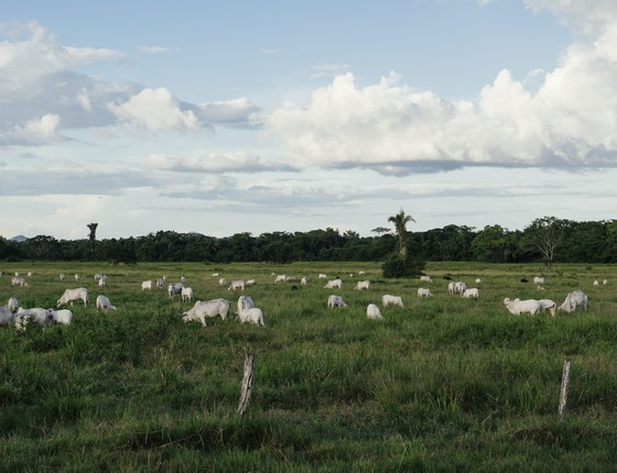 Fazenda de gado na Amazônia (Foto: Filipe Redondo/ÉPOCA)