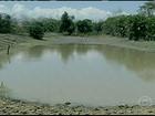Falta de água prejudica criação de animais em Porangatu, GO