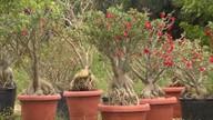 Pequenos produtores da Chapada Diamantina apostam no plantio de diversos tipos de flores