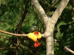 Projeto inclui a plantação de 1.500 árvores nativas da mata atlântica  (Foto: Reprodução/TV Rio  Sul)