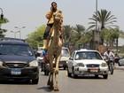 Egípcio é flagrado falando ao celular enquanto andava de camelo no Egito