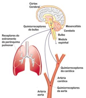 Esquema sanguíneo (Foto: Colégio Qi/Reprodução)
