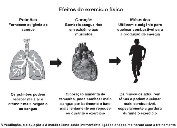 Enem (Foto: NIEMAN, D. Exercício e saúde. São Paulo: Manole, 1999 (adaptado))