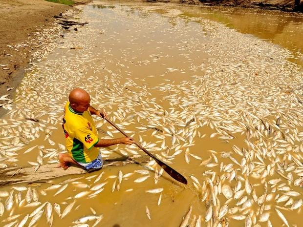 Foto registrada na quinta (19) mostra peixes mortos em rio (Foto: Chico Batata)