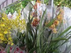 Palacete das Artes recebe feira de orquídeas neste final de semana