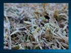 Centro-Oeste de MG terá madrugadas frias e geada nesta semana, diz Inmet