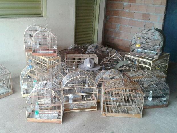 Mais de 30 pássaros da fauna silvestre foram capturados nesta quinta-feira em Uberlândia (18) pela Polícia Militar de Meio Ambiente, após denúncia. Uma pessoa foi presa durante a abordagem no Bairro Morumbi e com ele foram encontrados, além dos pássaros, 32 gaiolas e dois alçapões.  (Foto: PM Meio Ambiente/Divulgação)
