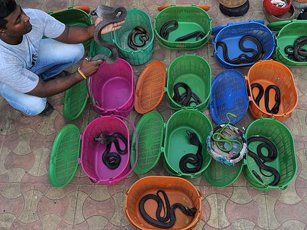 Serpentes e escorpiões serão tratados e soltos na natureza quando estiverem bem (Foto: Sam Panthaky/AFP)