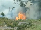 Boletim identifica quase 600 focos de queimadas em cidades do Pará