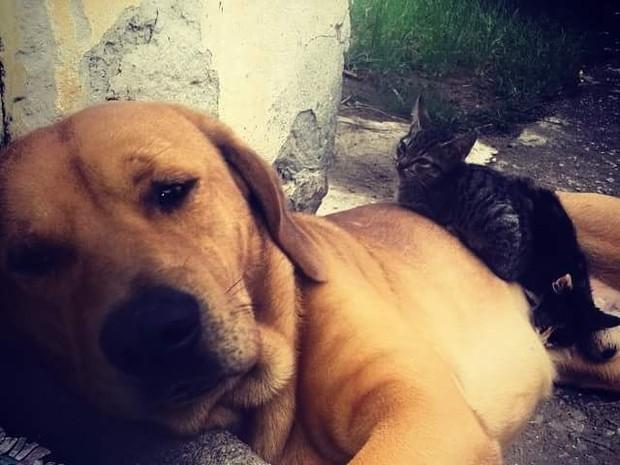 Cão Tupi convivia com outros animais de estimação na casa (Foto: Guilherme Martins da Cunha/Arquivo pessoal)