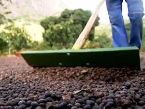 Produtores de café associados mudam de vida no ES (Foto: Reprodução/TV Globo)