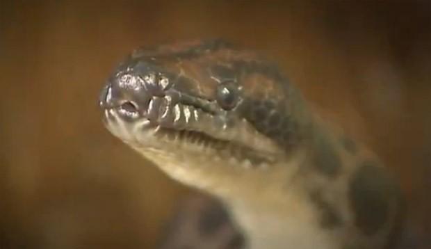 Cobra (Foto: Reprodução/Rede Vanguarda)