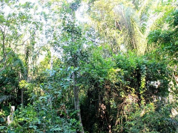 Diversas espécies de árvores e animais podem ser encontradas no campus (Foto: Marcos Dantas / G1)