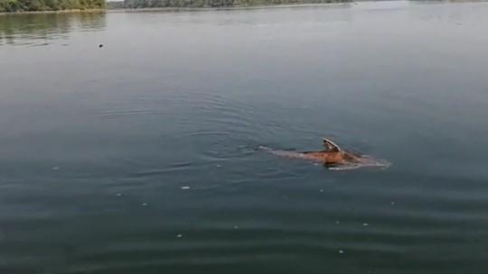 Índios acham boto, peixes e cágado mortos após vazamento de óleo