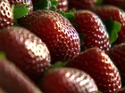 Festa comemora produção de morangos de Jarinu e Atibaia, em SP