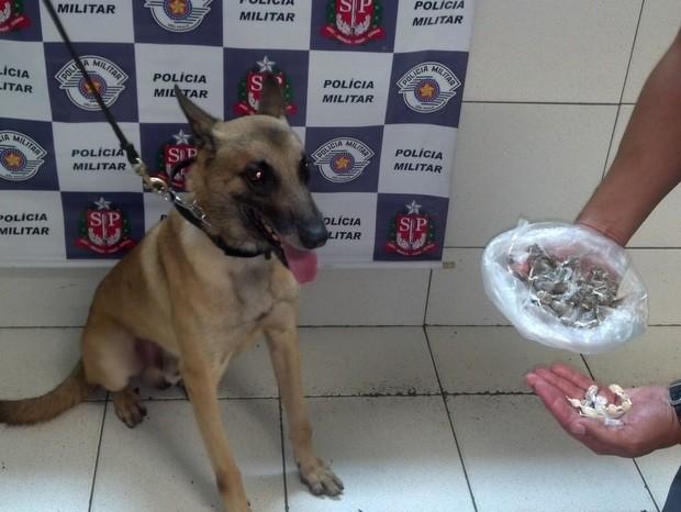 Cão da Polícia Militar encontra entorpecentes em Piracicaba (Foto: Fernanda Zanetti/G1)