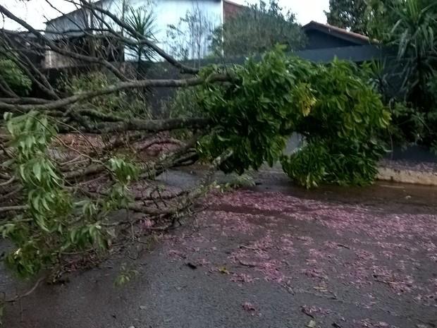 Árvores caíram em ruas do distrito de Floriano, em Maringá (Foto: Divulgação/ Defesa Civil de Maringá)